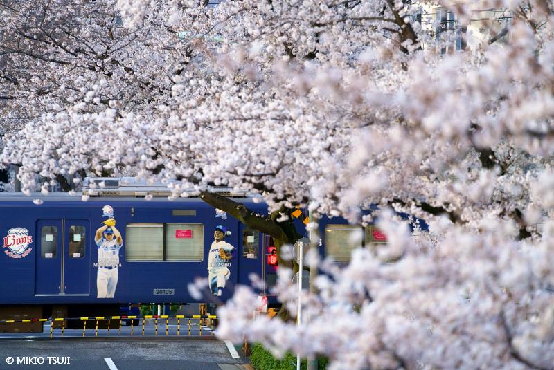 絶景探しの旅 - 絶景写真No.1631 桜満開 (新井薬師寺前/東京都 中野区)