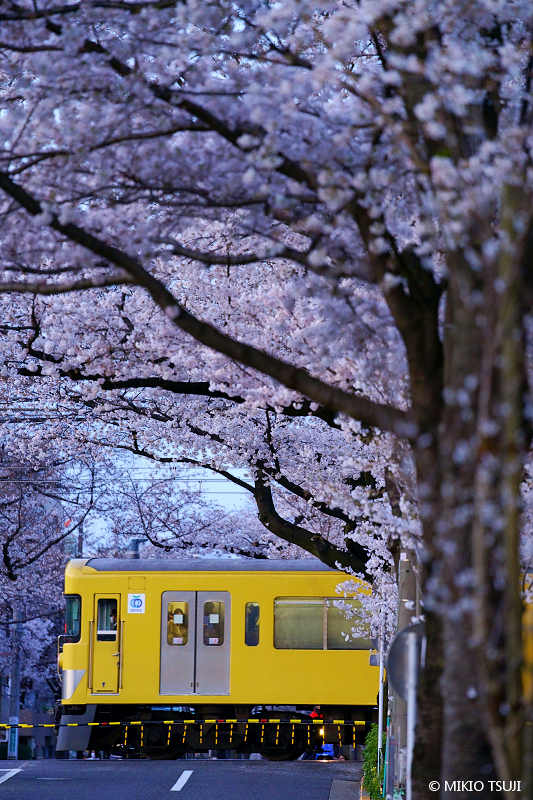 絶景探しの旅 - 絶景写真No.1632 桜の踏切 (新井薬師寺前/東京都 中野区)