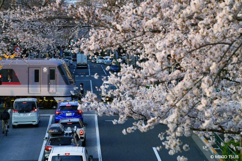 絶景探しの旅 - 絶景写真No.1633 桜の新井薬師公園前2号踏切 (東京都 中野区)
