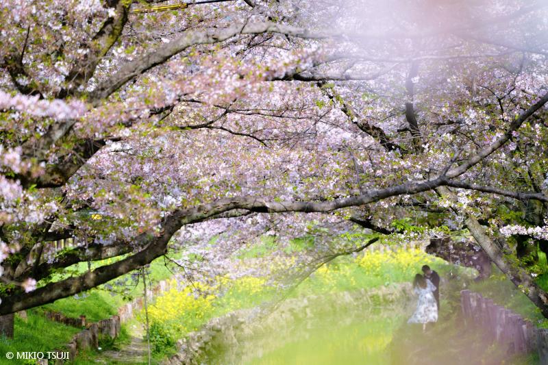 絶景探しの旅 - 絶景写真No.1641 新河岸川の春 (埼玉県 川越市)
