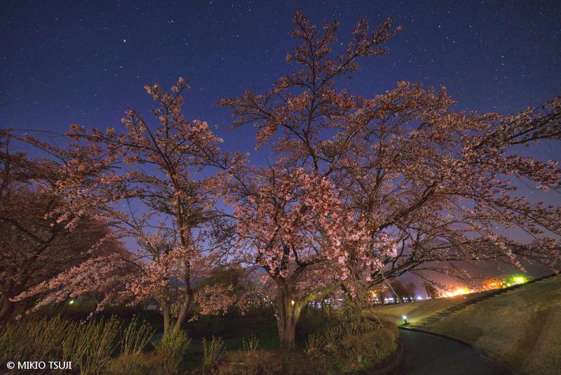 絶景探しの旅 - 絶景写真No.1654 桜の小径 (八木崎公園/山梨県 富士河口湖町)