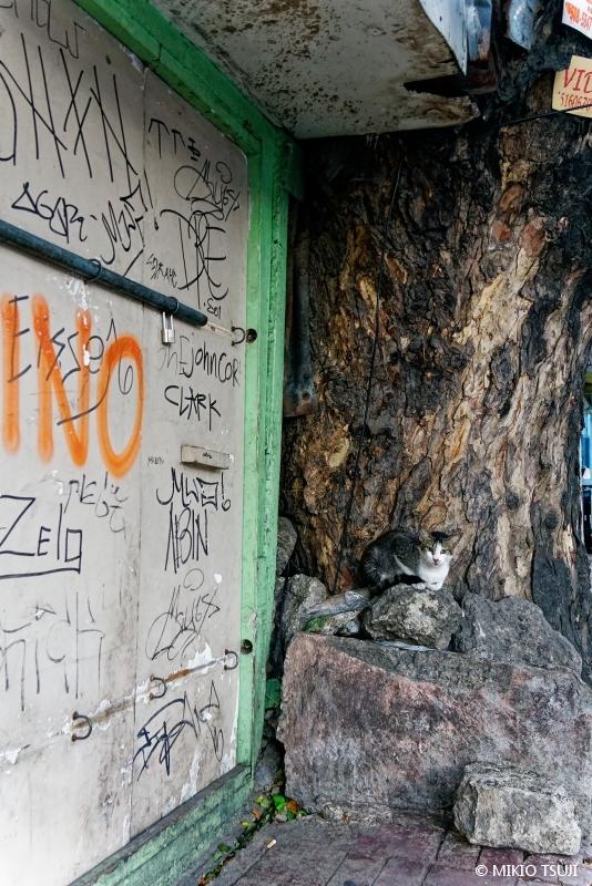 絶景探しの旅 - 絶景写真No.1680 セブのストリートにゃんこ (フィリピン セブ島)